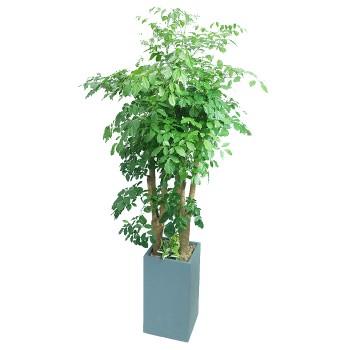 [M19]해피트리(행복나무)(시멘)C형