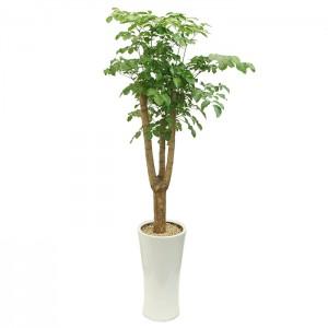 [M19]해피트리(행복나무)E형