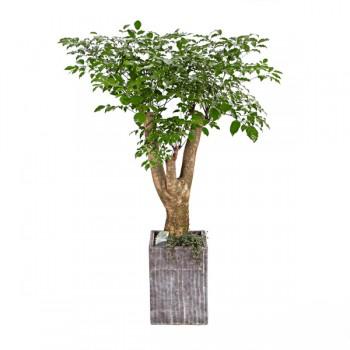 [N15]해피트리(행복나무)(시멘)B형