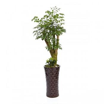 [N15]해피트리(행복나무)A형