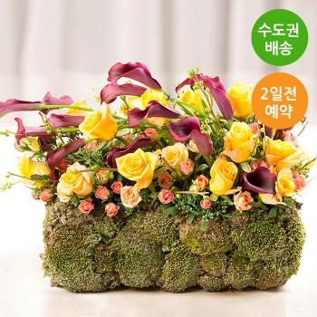 [예약/수도권배송]숲 속 정원